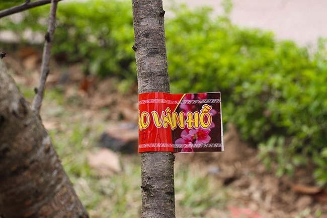 Lo dao dan tem dau tien xuong Ha Noi phuc vu Tet Nguyen dan-Hinh-5