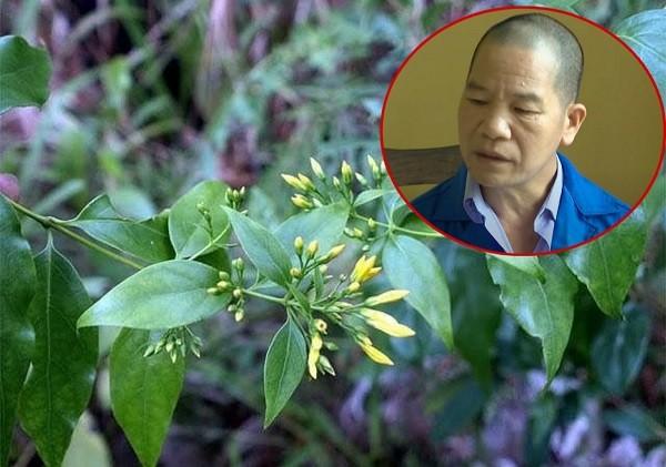 Ly ky hanh trinh pha vu an dung la ngon dau doc 5 nguoi-Hinh-2