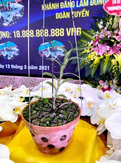 Xon xao hinh anh buoi le nhuong ban hoa lan 5 canh trang gan 19 ty o Ha Nam-Hinh-2