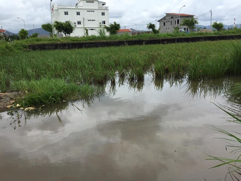 Quang Ninh: Dau tran theo nuoc mua xuong dong ruong, dan buc xuc-Hinh-10