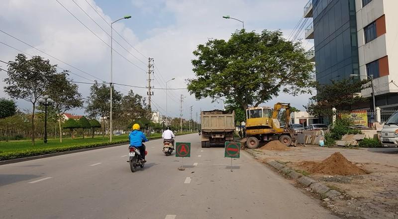 Thay the hon 700 cay xanh: Thanh pho Hai Duong lam thieu quy trinh?-Hinh-4