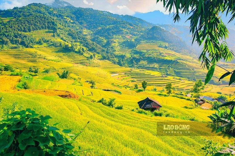 Ngat ngay mua lua chin tren Ta Leng Lai Chau-Hinh-2