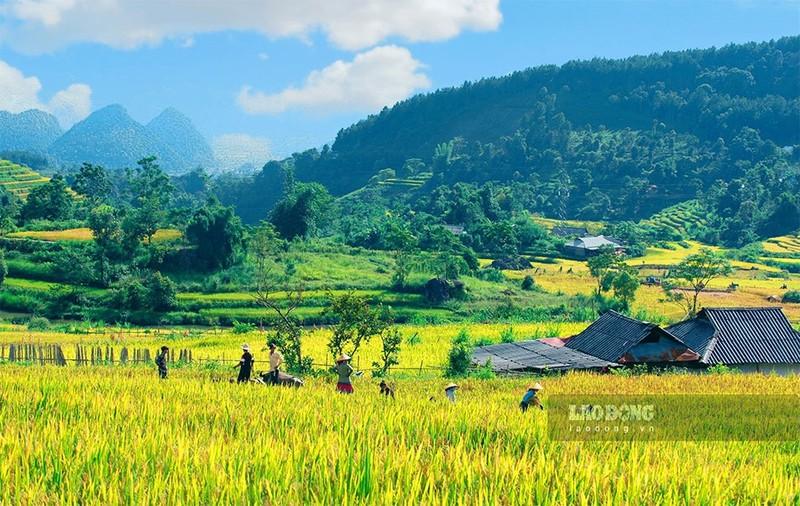 Ngat ngay mua lua chin tren Ta Leng Lai Chau-Hinh-6