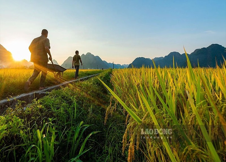 Ngat ngay mua lua chin tren Ta Leng Lai Chau-Hinh-7