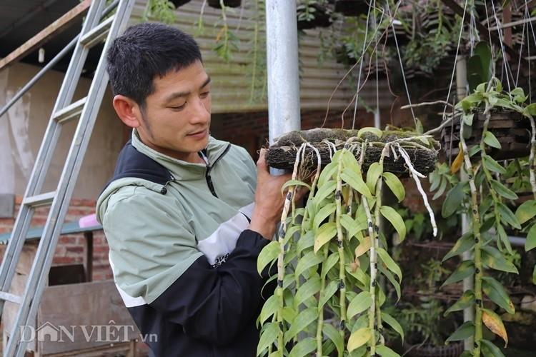 La ma hay: Cho lan rung 'uong' nuoc luoc du du thu hang tram trieu-Hinh-2