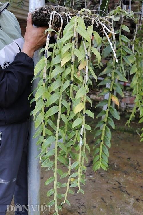 La ma hay: Cho lan rung 'uong' nuoc luoc du du thu hang tram trieu-Hinh-3