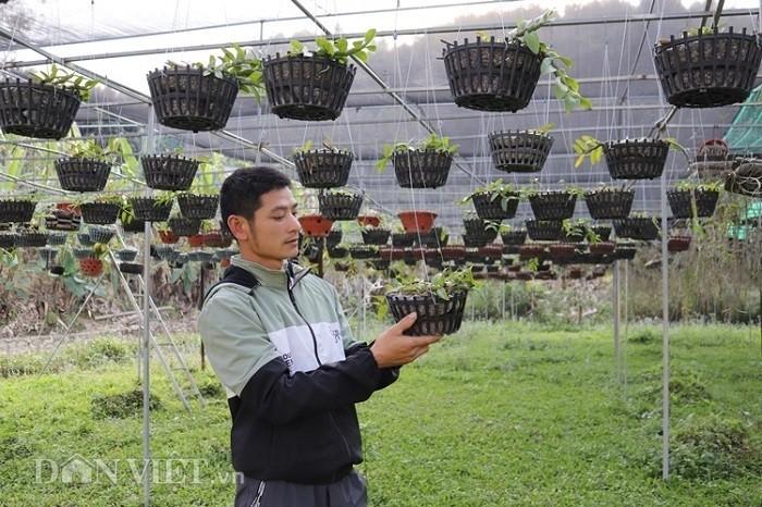 La ma hay: Cho lan rung 'uong' nuoc luoc du du thu hang tram trieu-Hinh-4