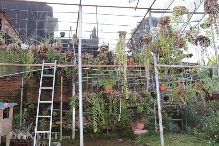 La ma hay: Cho lan rung 'uong' nuoc luoc du du thu hang tram trieu-Hinh-6