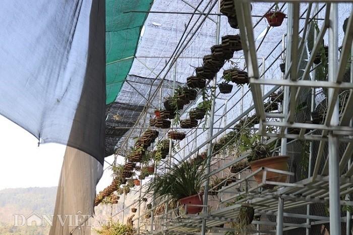 La ma hay: Cho lan rung 'uong' nuoc luoc du du thu hang tram trieu-Hinh-7