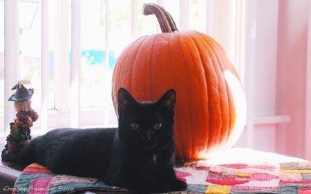 7 dieu kieng ky can phai tranh trong ngay Halloween