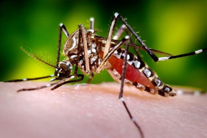 Viet Nam phat hien ca benh do virus Zika, nhung bien chung nguy hiem