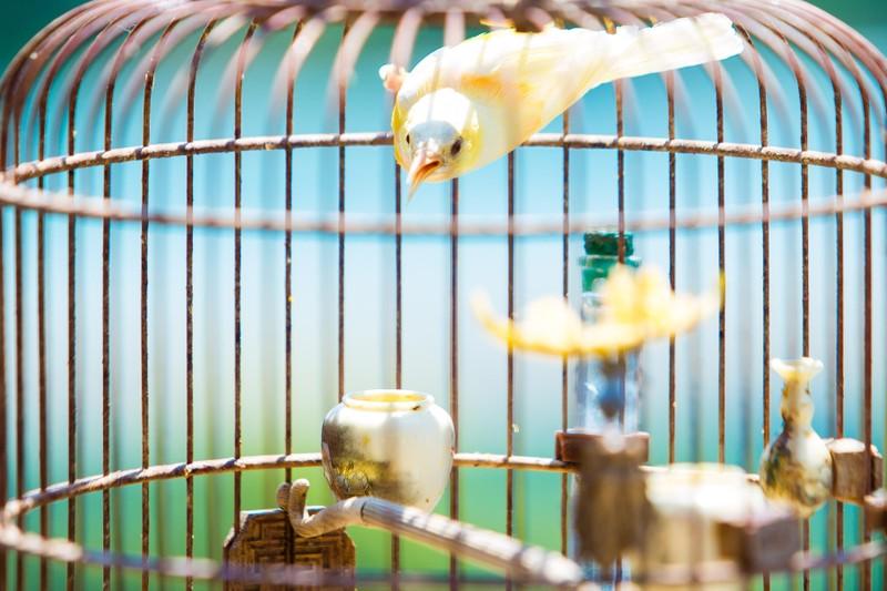 Bi an quanh vi dai gia cung dan chim quy hang chuc ty dong-Hinh-5