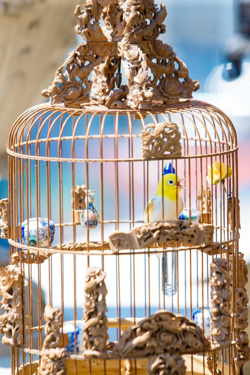 Bi an quanh vi dai gia cung dan chim quy hang chuc ty dong-Hinh-6