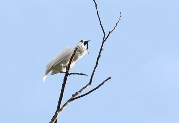 Ky quac loai chim