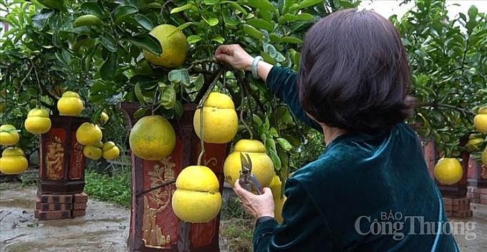 Doc dao thi truong buoi bonsai hinh ho lo dip Tet Canh Ty 2020-Hinh-2