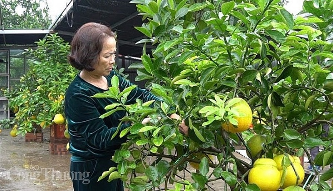 Doc dao thi truong buoi bonsai hinh ho lo dip Tet Canh Ty 2020-Hinh-4