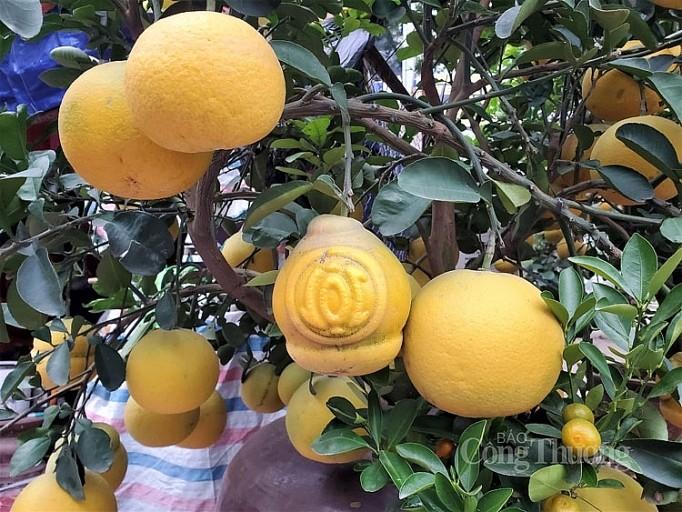 Doc dao thi truong buoi bonsai hinh ho lo dip Tet Canh Ty 2020-Hinh-7
