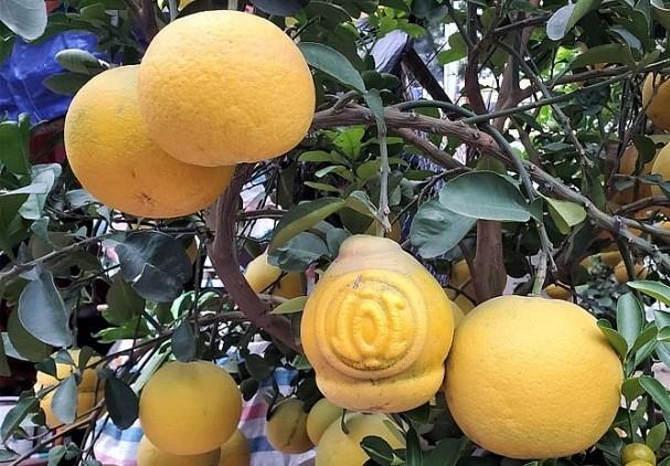Doc dao thi truong buoi bonsai hinh ho lo dip Tet Canh Ty 2020-Hinh-9