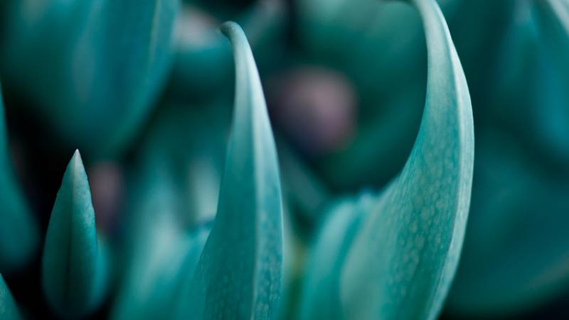 Ky bi loai hoa mong vuot ngoc xanh vua dep vua dang so-Hinh-2