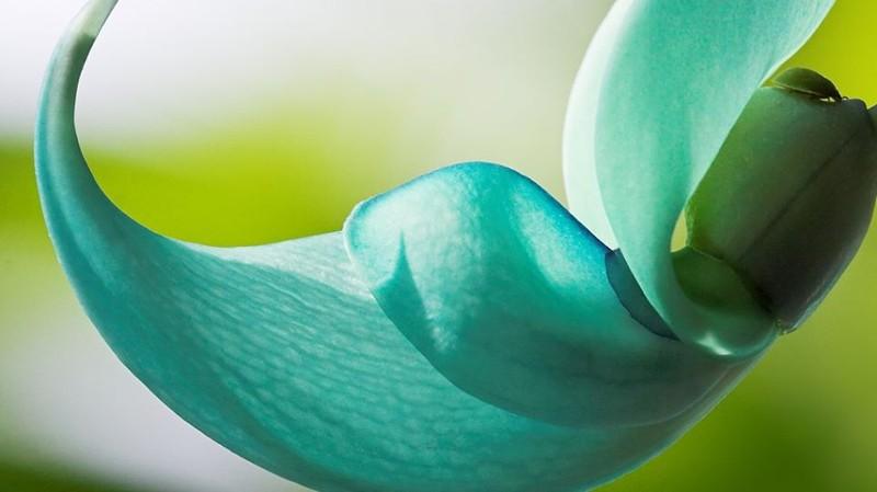 Ky bi loai hoa mong vuot ngoc xanh vua dep vua dang so-Hinh-3