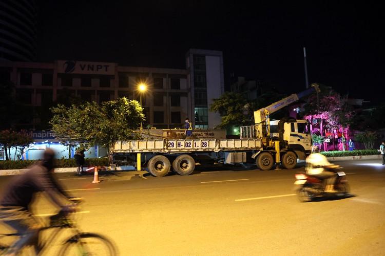 Ha Noi: Danh chuyen toan bo cay phong la do tren duong Nguyen Chi Thanh va Tran Duy Hung trong dem-Hinh-8