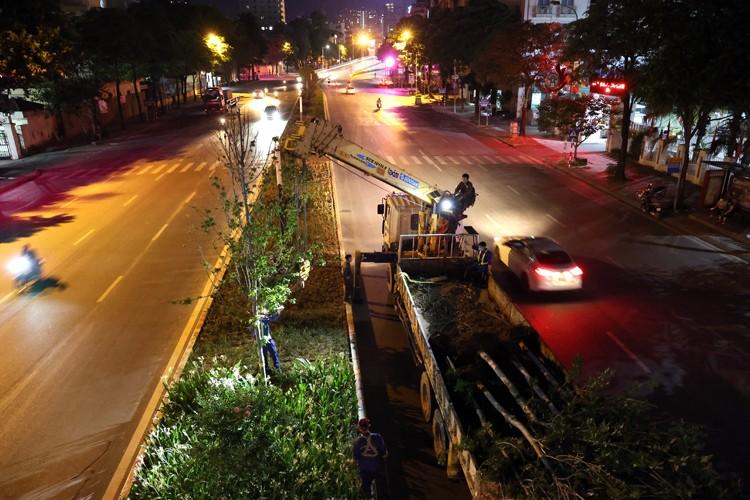 Ha Noi: Danh chuyen toan bo cay phong la do tren duong Nguyen Chi Thanh va Tran Duy Hung trong dem