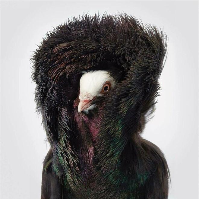 Đầu cắt moi đến râu quai nón - chùm ảnh chân dung cực nghệ của một số loài chim siêu hiếm có khó tìm - Ảnh 13.