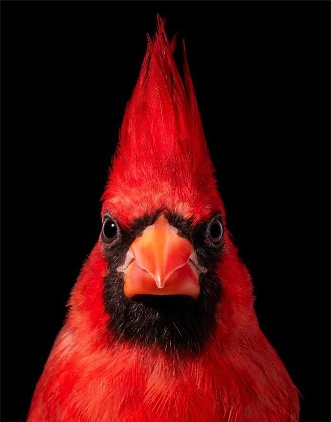 Đầu cắt moi đến râu quai nón - chùm ảnh chân dung cực nghệ của một số loài chim siêu hiếm có khó tìm - Ảnh 15.