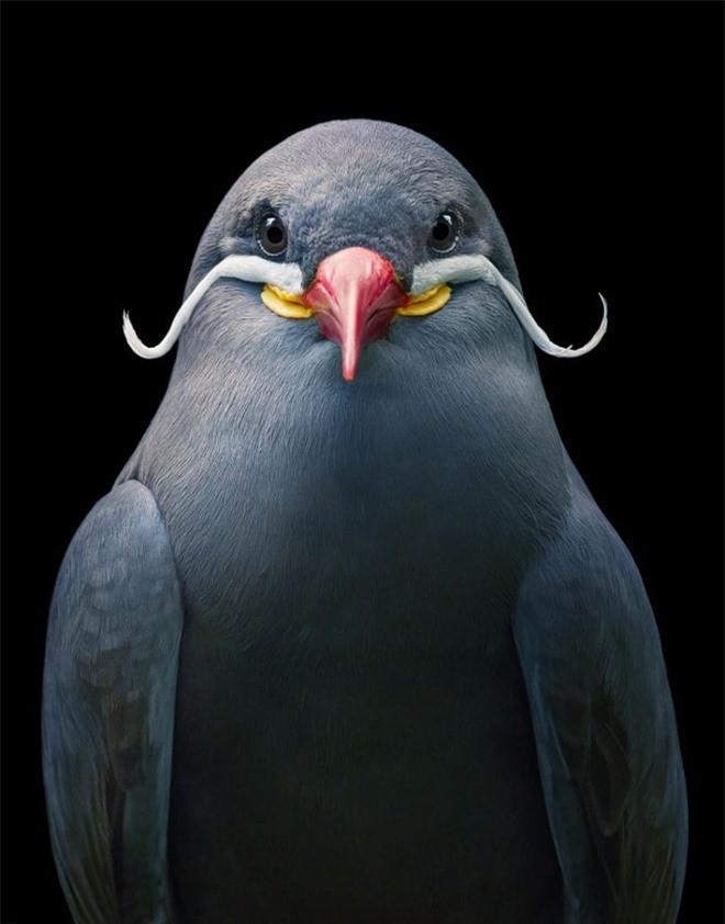 Đầu cắt moi đến râu quai nón - chùm ảnh chân dung cực nghệ của một số loài chim siêu hiếm có khó tìm - Ảnh 21.