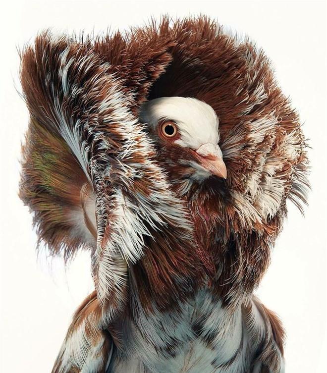 Đầu cắt moi đến râu quai nón - chùm ảnh chân dung cực nghệ của một số loài chim siêu hiếm có khó tìm - Ảnh 6.