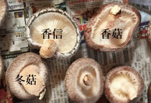 Nam huong Nhat hon 8 trieu dong/kg, dan Ha Noi mua ve xao rau