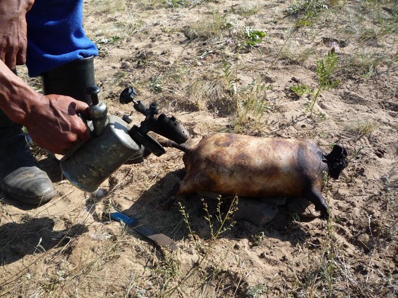 Boodog - Mon an kinh di gay tranh cai vi qua tan bao-Hinh-2