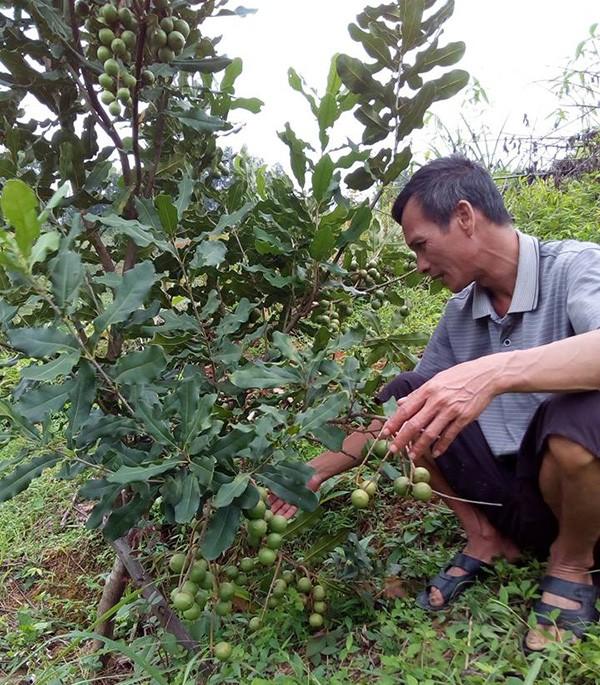 """Lam giau khac nguoi: Chuyen ve """"ong trum"""" cay """"ty do"""" o xu Lang-Hinh-2"""