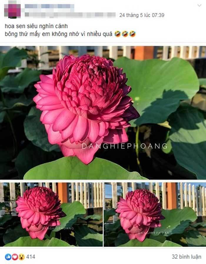 Xon xao hoa sen 1.000 canh: Dan choi phat sot, lung khap Viet Nam-Hinh-2