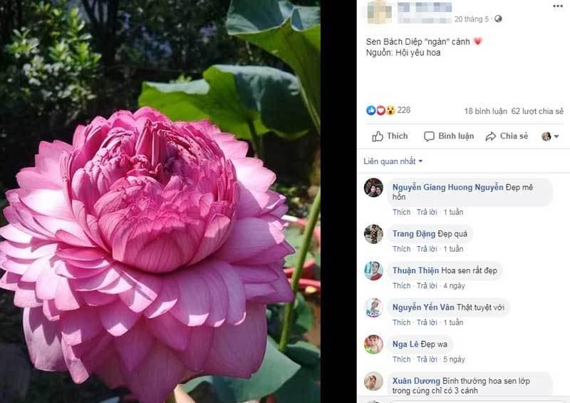 Xon xao hoa sen 1.000 canh: Dan choi phat sot, lung khap Viet Nam
