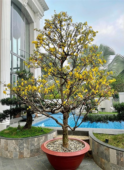 Bao Thy dai gia: Chon toan loai hoa hot trend dat tien trang hoang Tet