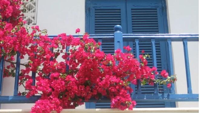 Trong hoa o ban cong nho nguyen tac nay hut tai loc vao nha