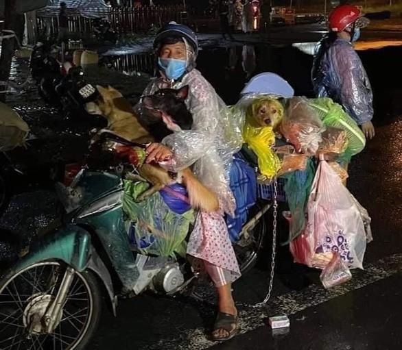 Vu 15 con cho o Ca Mau: Vat nuoi co lam lay lan virus SARS-CoV-2?