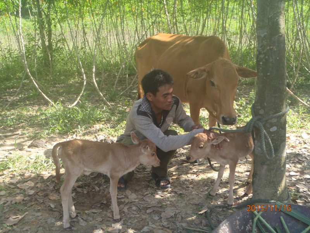 Ky la bo sinh doi be con o Quang Tri-Hinh-2