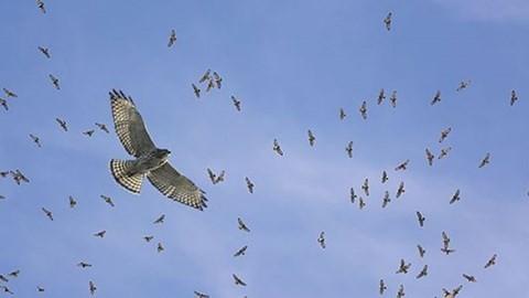 Kinh hoang 13.000 con chim