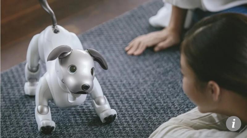 Lieu robot cho meo co the thay the thu cung that su?