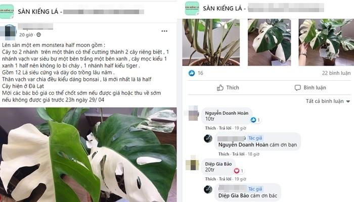 """Cay kieng dot bien tien ty: Chuyen gia canh bao lan var """"phien ban"""" moi"""