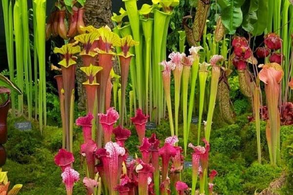 Ke an thit dang so trong tu nhien doi lot cay hoa dep long lanh-Hinh-7