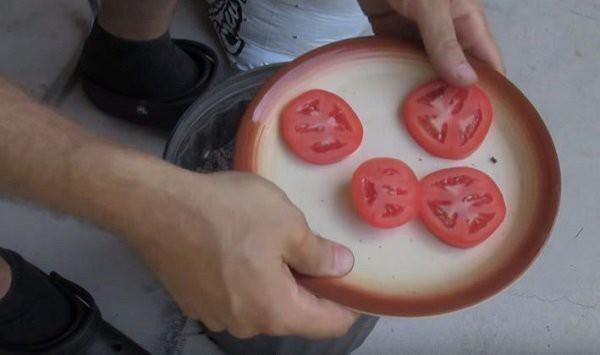 """Cach trong ca chua """"thai mieng"""", duoc ca vuon ca chua sai triu-Hinh-4"""