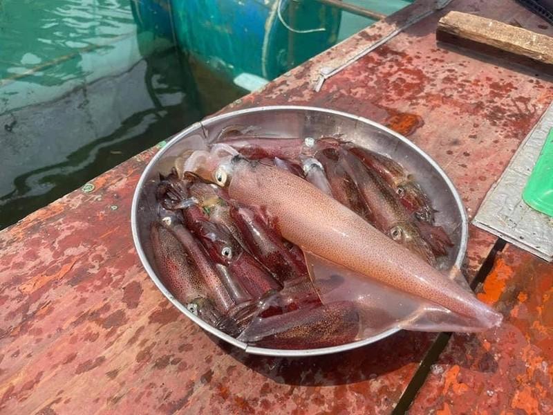 Con nhay tanh tach, tien trieu moi kg van khong co de ban-Hinh-9
