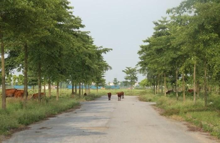 Thu tuong yeu cau lam ro 2.000 ha dat bo hoang o Me Linh