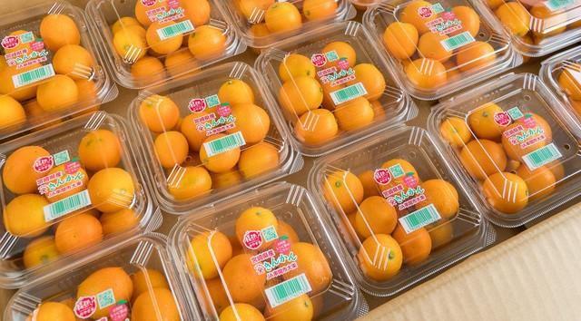 Mua quat Nhat 2 trieu dong/kg ve lam mut an Tet cho sang chanh-Hinh-2