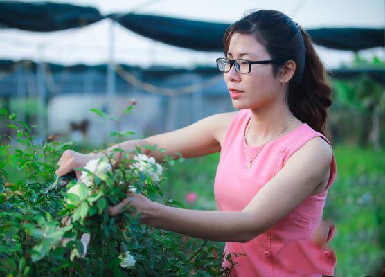 Man nhan vuon hoa hong bac ty cua dai gia Viet-Hinh-8