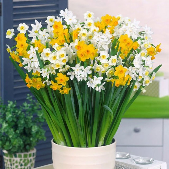 5 loai hoa hut tai loc, cuoi nam nen bay trong nha de them sung tuc-Hinh-3