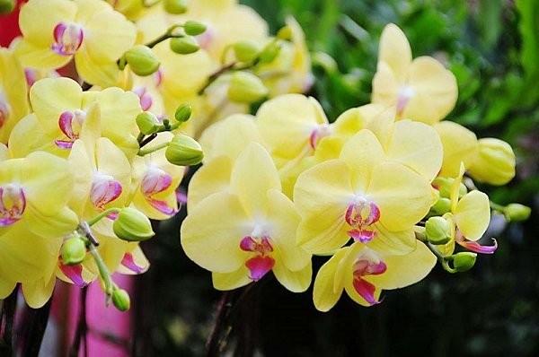 5 loai hoa hut tai loc, cuoi nam nen bay trong nha de them sung tuc